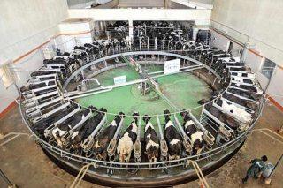 Os gandeiros españois perden un céntimo en cada litro de leite que producen