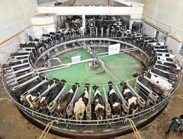 Pride of Cows: Leite premium da granxa máis moderna da India