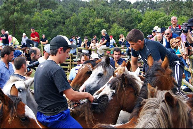 O método que se usa para rapar en Candaoso, subido a cabalo, é único en Galicia