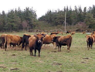 A Deputación de Lugo apoia a comercialización de carne  e produtos de razas autóctonas galegas