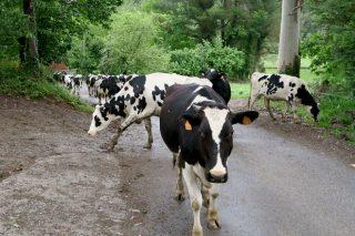 Xornada sobre a pegada de carbono en ganderías de produción ecolóxica