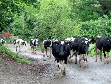 5 gráficas para entender a produción de leite no mundo