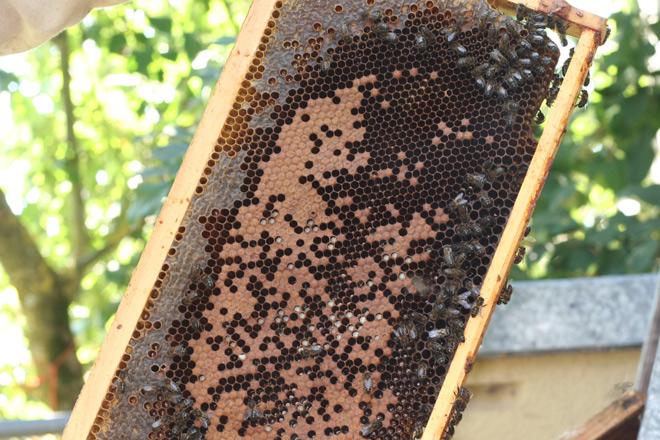 Cera-cria-abellas-mel-