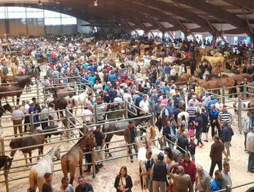 Los caballos para la vida alcanzan un precio medio de 1.465 euros en la Feria de Ganado Equino del Apóstol