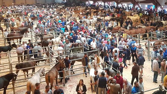 Os cabalos para vida acadan un prezo medio de 1.465 euros na Feira de Gando Equino do Apóstolo