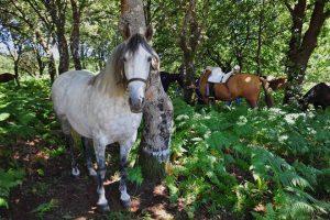 Feira Cabalo Vilar de Donas1