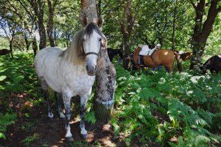 Vilar de Donas acolle o 11 de agosto a XXVIII Feira do Cabalo da comarca da Ulloa