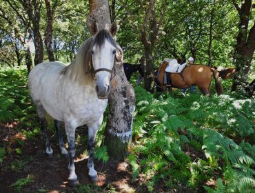 Vilar de Donas acoge el 11 de agosto la XXVIII Feira do Cabalo da comarca da Ulloa