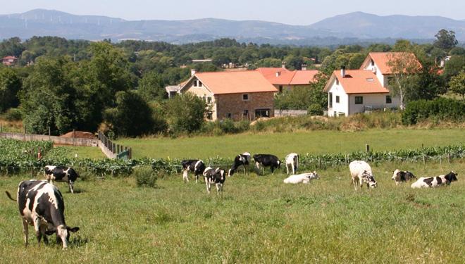 Ganderia-Fraga-Vacas-secas-no-pasto-