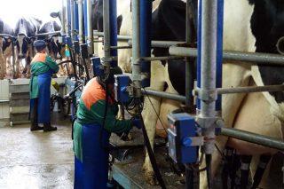 O prezo medio do leite na Unión Europea baixou un 6,2% no que vai de 2020