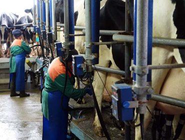 Como se está a vivir nas granxas a crise do coronavirus?