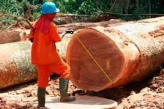 El 16% de los productos de madera de importación proceden de zonas de riesgo