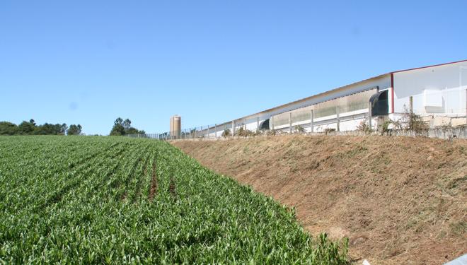 Vista da granxa de polos e unha das fincas de millo afectadas pola granizada caída en días pasados no Deza.
