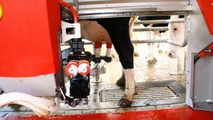 El brazo híbrido es robusto y garantiza la integridad de la vaca y facilita el ordeño.