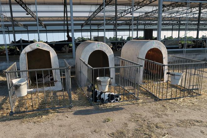 Boxes para as becerras en lactación