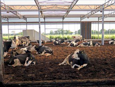 Granxa Lagendijh, en Holanda, liberdade para as vacas e manexo automatizado