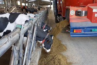 Coronavirus: medidas de prevención no sector gandeiro