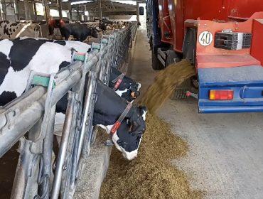 ¿Que hai de verdade nos mitos sobre a alimentación das vacas?