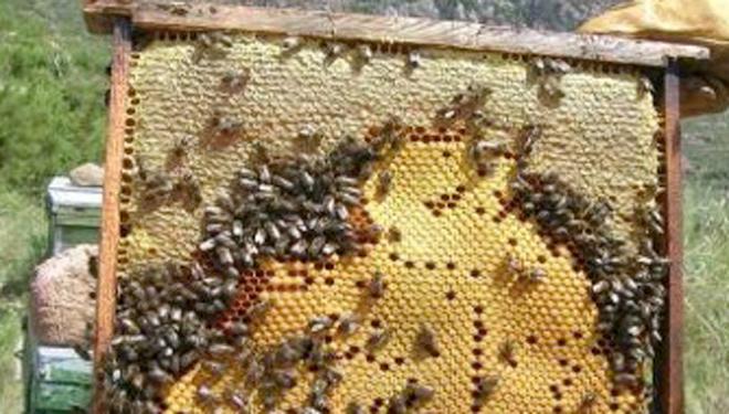 cera-panal-cria-abeja-