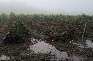 Importantes perdas polas treboadas nos viñedos de Monterrei e Valdeorras
