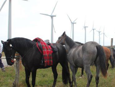 Os cabalos, protagonistas de novo o 21 de xullo na Festa do Turismo Rural do Vicedo