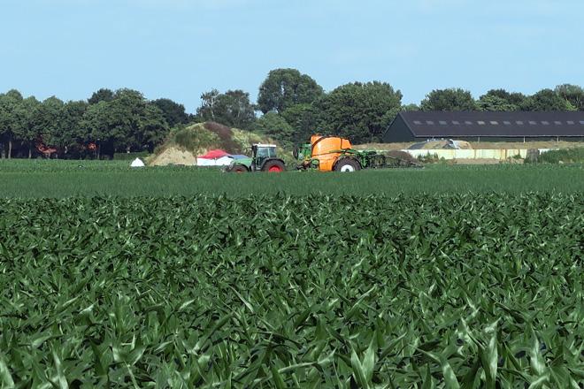 Traballos de sulfatado do millo nunha finca a carón da explotación