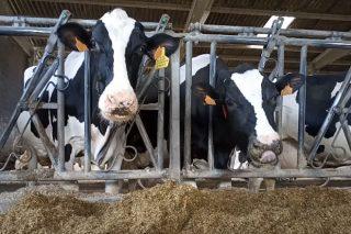 Las granjas tendrán que medir sus emisiones y comprometerse a reducirlas