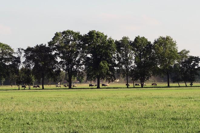 A zona de pastoreo, con sombra, éstá nun radio de medio quilómetro desde a explotación