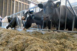 Ferramentas para que os prezos do leite non queden fóra do mercado en Galicia