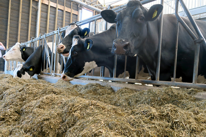 Sin cambios en los precios mensuales de la leche