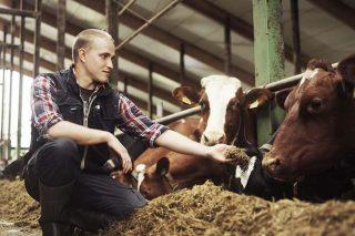 Ranking das industrias europeas que máis pagan polo leite