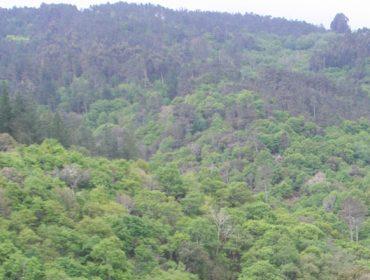 """Charla sobre """"Bosques, biodiversidade e COVID-19"""""""