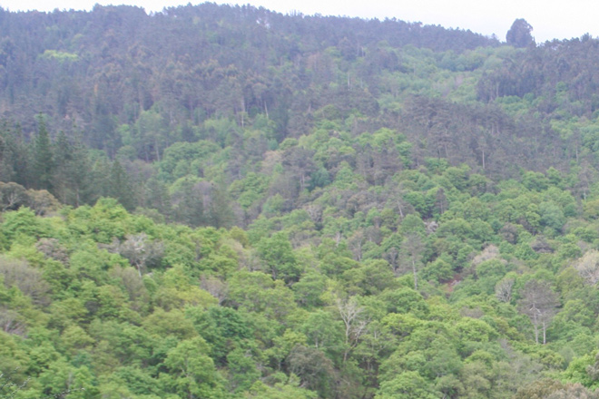 Bosque-sobreiral-do-Arnego-