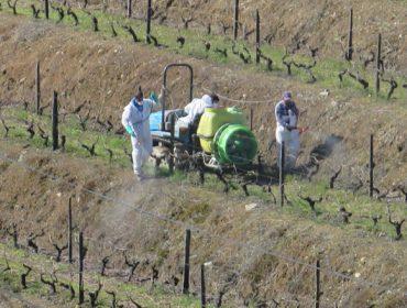 Estratexias que seguen en Portugal para reducir o uso de fitosanitarios no viñedo