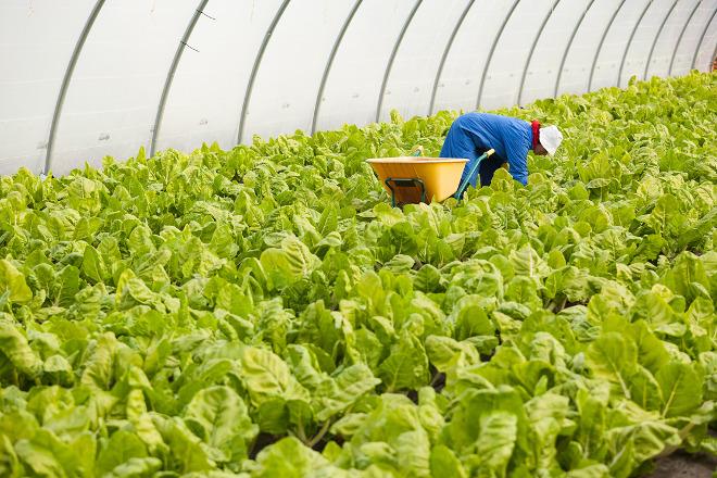 Aprazada a setembro a xornada sobre maquinaria para a mecanización da horta