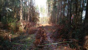 Minifundismo-terreno-forestal-monte-Agolada-