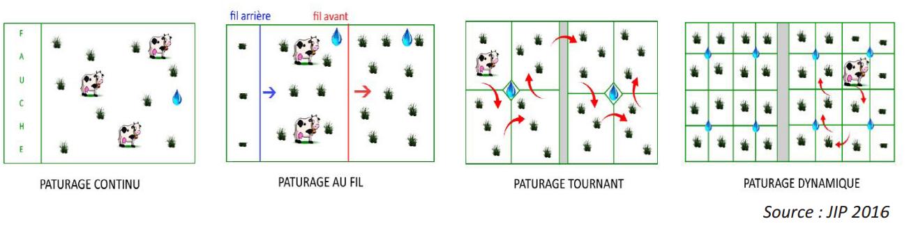 PASTOREO CELULAR IDELE FRANCIA 2