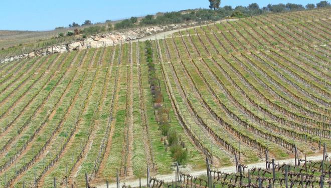 Pradeira-biodiversa-venid-Portugal-Duero-