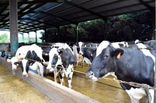 Repunte estacional do prezo do leite no outono