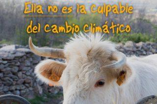Humor dos gandeiros fronte aos mitos dos gases contaminantes das vacas