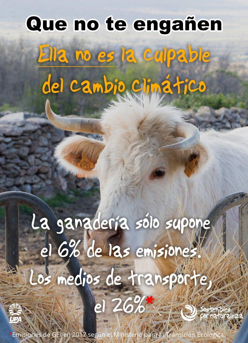 VACAS CAMBIO CLIMÁTICO 3