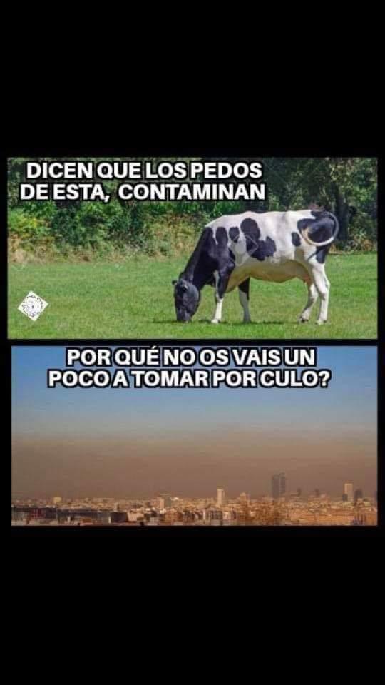 VACAS CAMBIO CLIMÁTICO 5