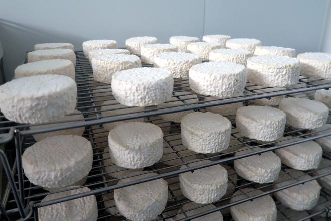 A variedade Xiros é un queixo con penicilium tipo Camembert