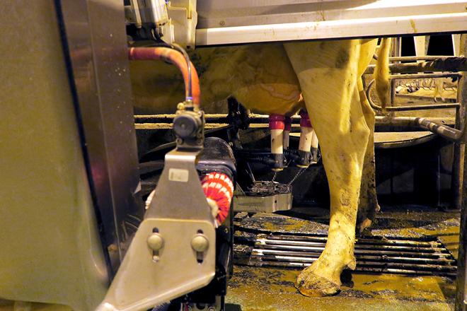 Teñen instalados 4 robots de muxido e prevén 2 máis para seguir medrando