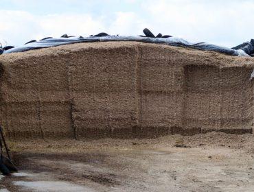 Micotoxinas: como reducir o impacto que poden causar na alimentación do gando?