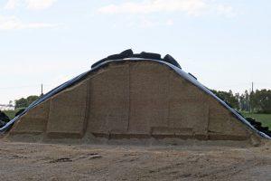 Das 138 hectáreas que manexan destinan 30 a botar millo para ensilado