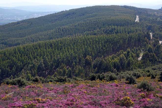 Como funciona o arrendamento de terras de Navigator para plantacións forestais?