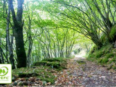 Galicia ya cuenta con 3.000 hectáreas certificadas PEFC en el Camino