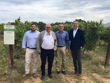 Novos proxectos de Adegas Terras Gauda para lograr viños máis ecolóxicos