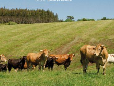 Programa da xornada técnica das IXPs Ternera Gallega e Vaca/Boi Galego